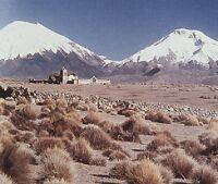Conoce los hábitats de Chile
