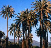 Chile y sus hábitats: Matorral y bosque esclerófilo