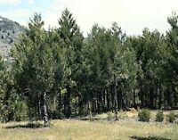 Chile y sus hábitats: Bosque caducifolio