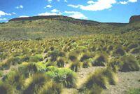 Chile y sus hábitats: Estepa patagónica