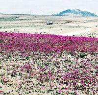 Chile y sus h�bitats: Regi�n del desierto