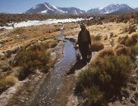 Chile y sus hábitats: Estepa alto andina