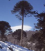 Chile y sus hábitats: Bosque andino