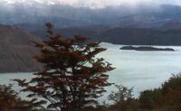 Chile y sus h�bitats: Bosque patag�nico